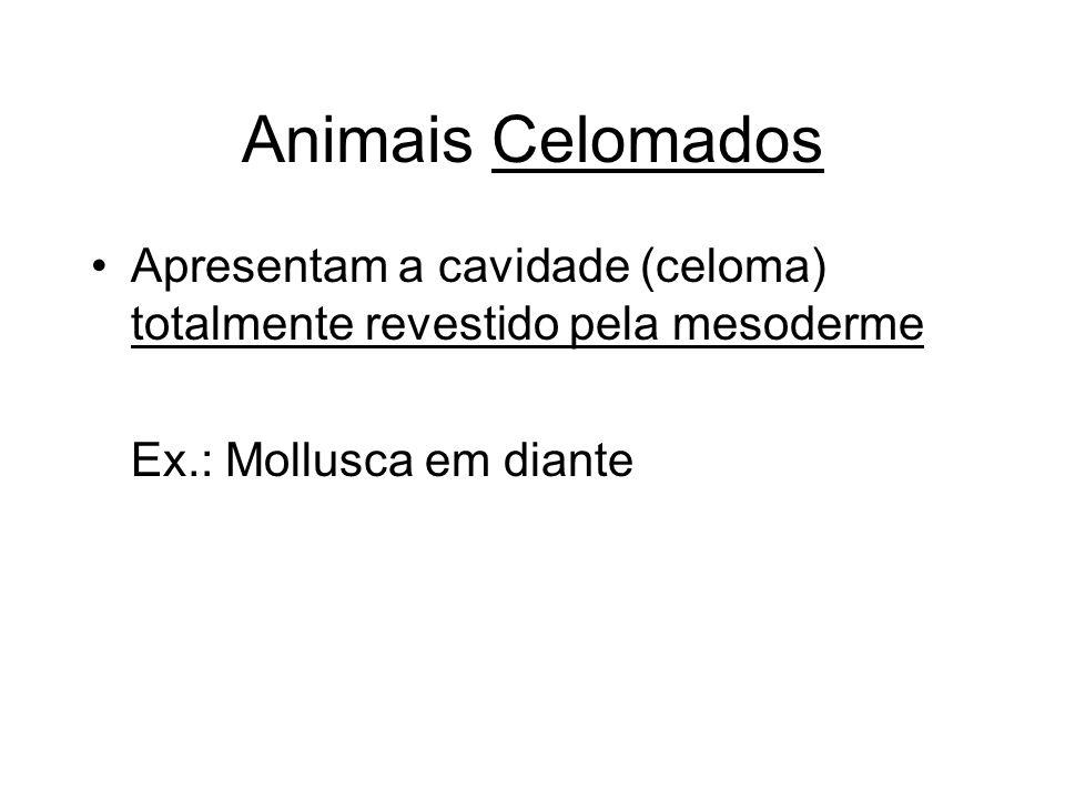 Animais CelomadosApresentam a cavidade (celoma) totalmente revestido pela mesoderme.