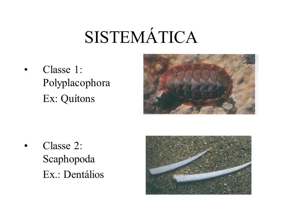 SISTEMÁTICA Classe 1: Polyplacophora Ex: Quítons Classe 2: Scaphopoda