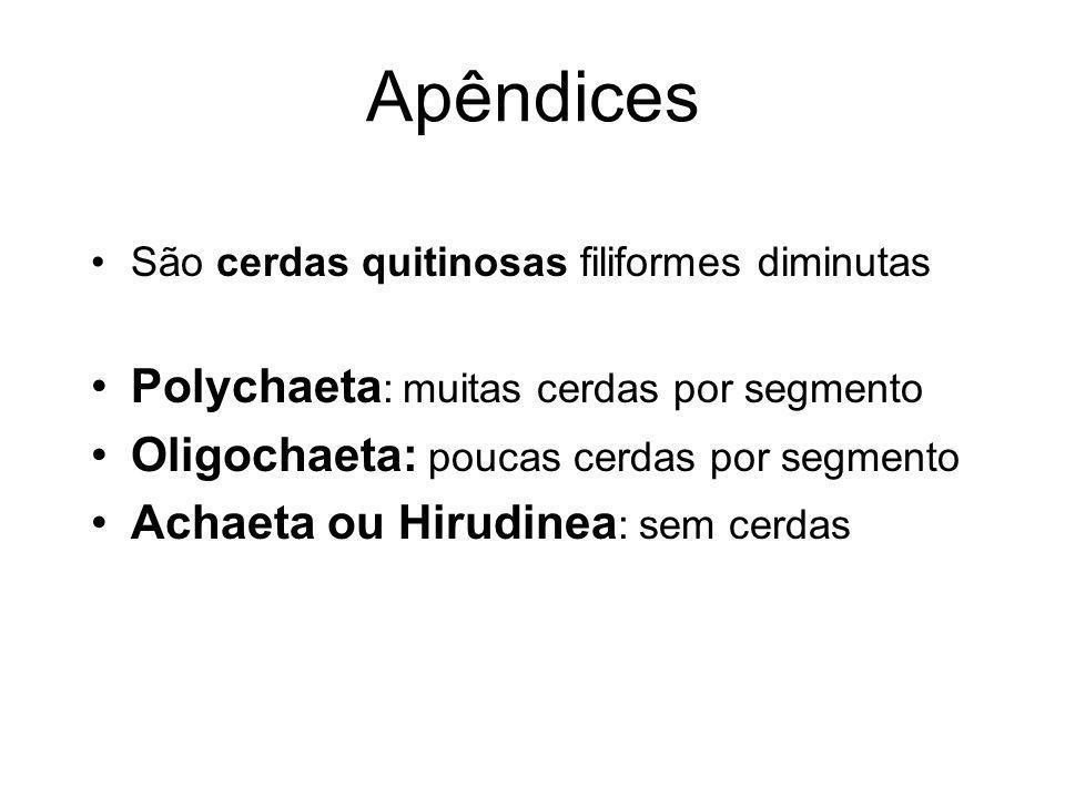 Apêndices Polychaeta: muitas cerdas por segmento
