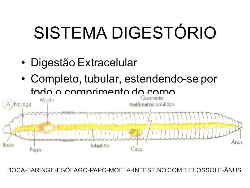 SISTEMA DIGESTÓRIO Digestão Extracelular