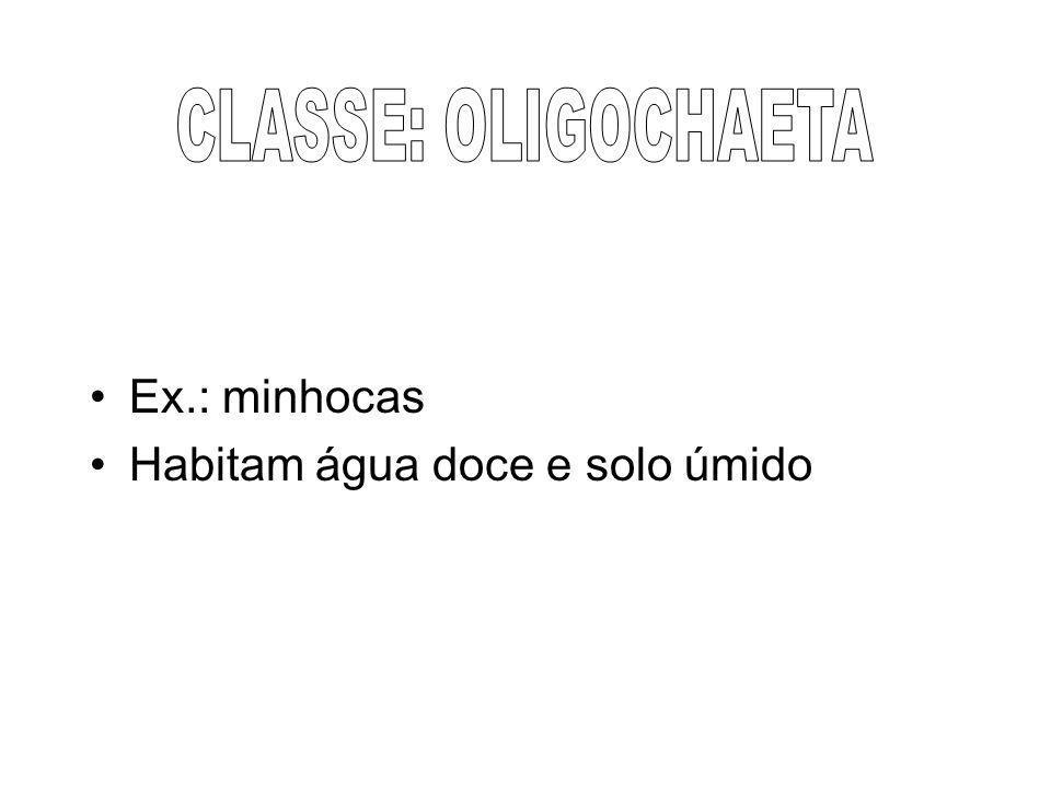 CLASSE: OLIGOCHAETA Ex.: minhocas Habitam água doce e solo úmido