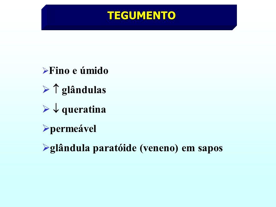 glândula paratóide (veneno) em sapos