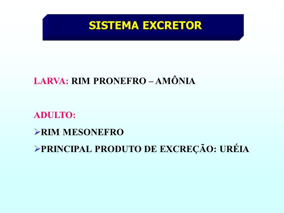 SISTEMA EXCRETOR LARVA: RIM PRONEFRO – AMÔNIA ADULTO: RIM MESONEFRO