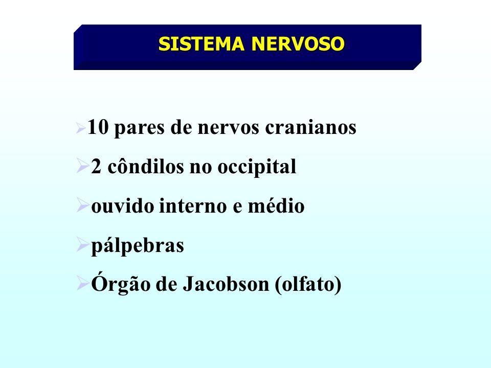 Órgão de Jacobson (olfato)