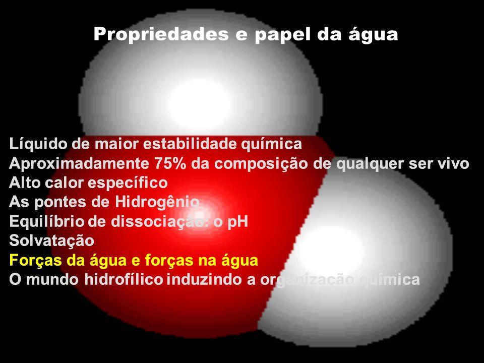 Propriedades e papel da água