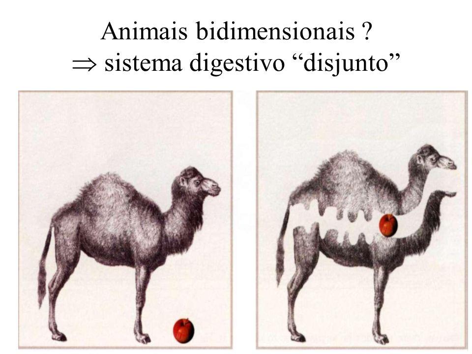 Animais bidimensionais  sistema digestivo disjunto