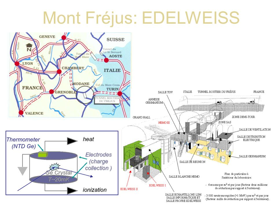 Mont Fréjus: EDELWEISS
