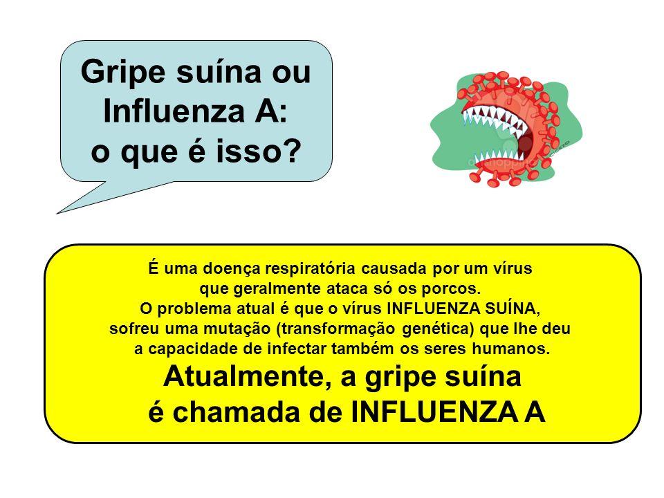 Gripe suína ou Influenza A: o que é isso