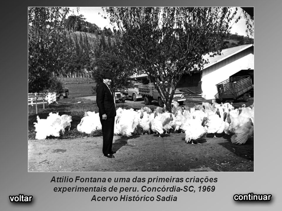 Attilio Fontana e uma das primeiras criações experimentais de peru
