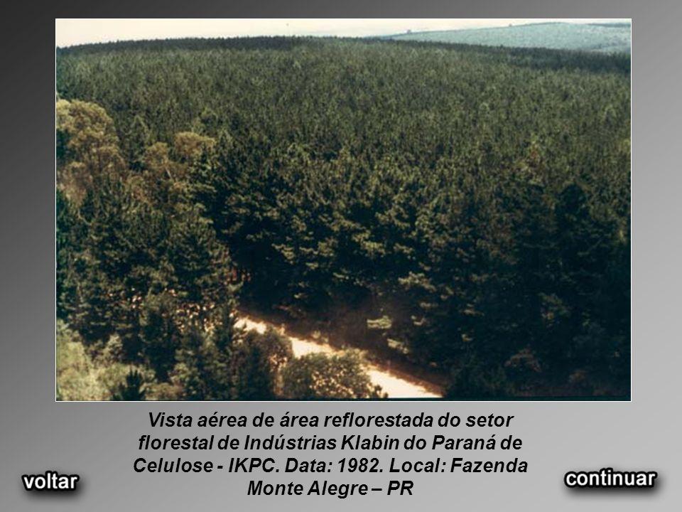 Vista aérea de área reflorestada do setor florestal de Indústrias Klabin do Paraná de Celulose - IKPC.