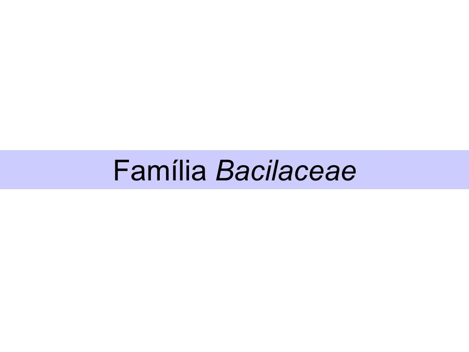 Família Bacilaceae