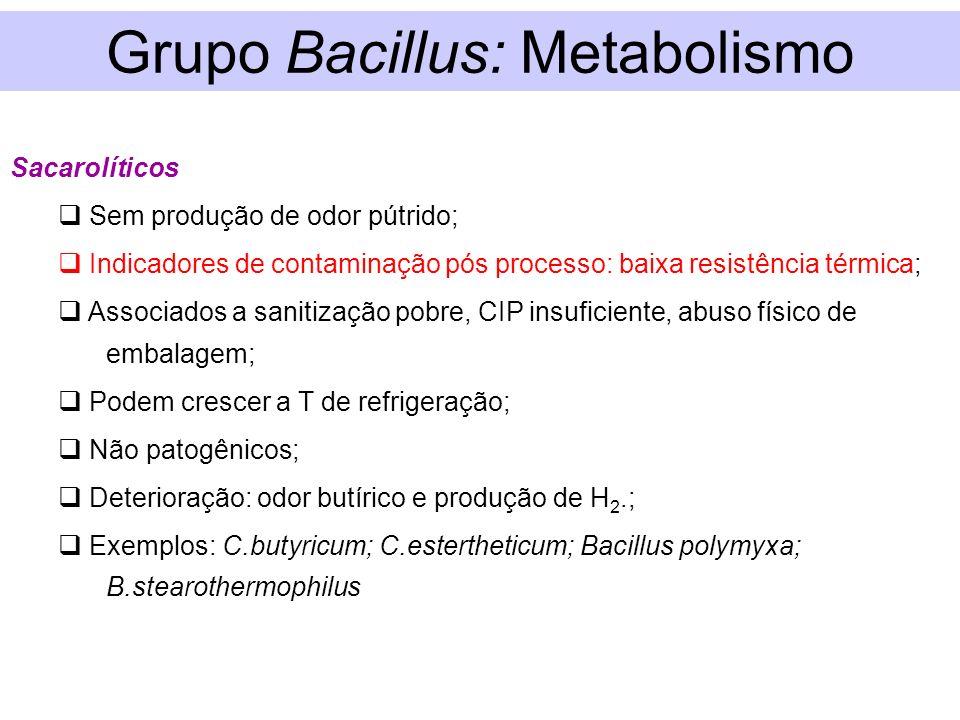 Grupo Bacillus: Metabolismo
