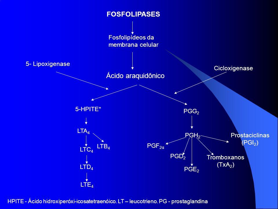 FOSFOLIPASES Ácido araquidônico Fosfolipídeos da membrana celular