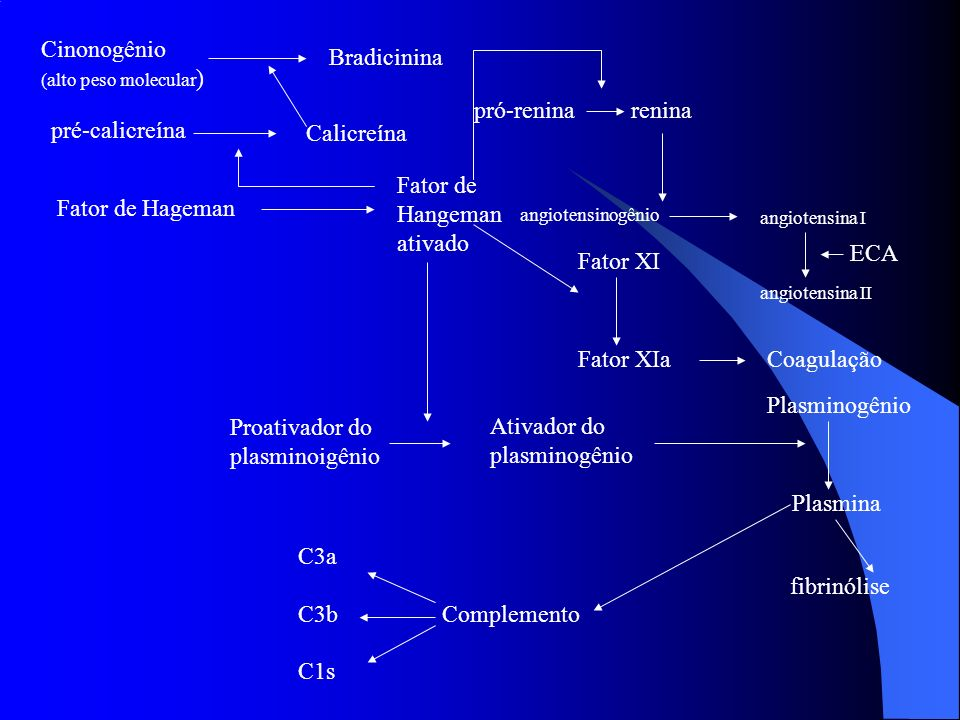 Cinonogênio Bradicinina pró-renina renina pré-calicreína Calicreína