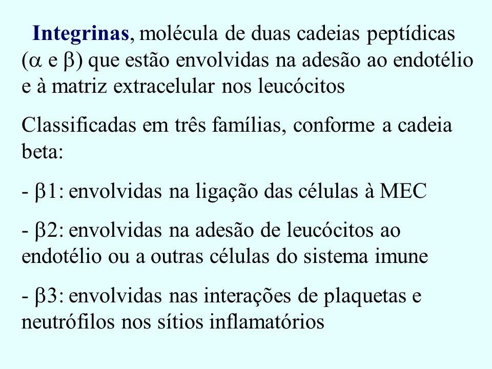 Integrinas, molécula de duas cadeias peptídicas (a e b) que estão envolvidas na adesão ao endotélio e à matriz extracelular nos leucócitos