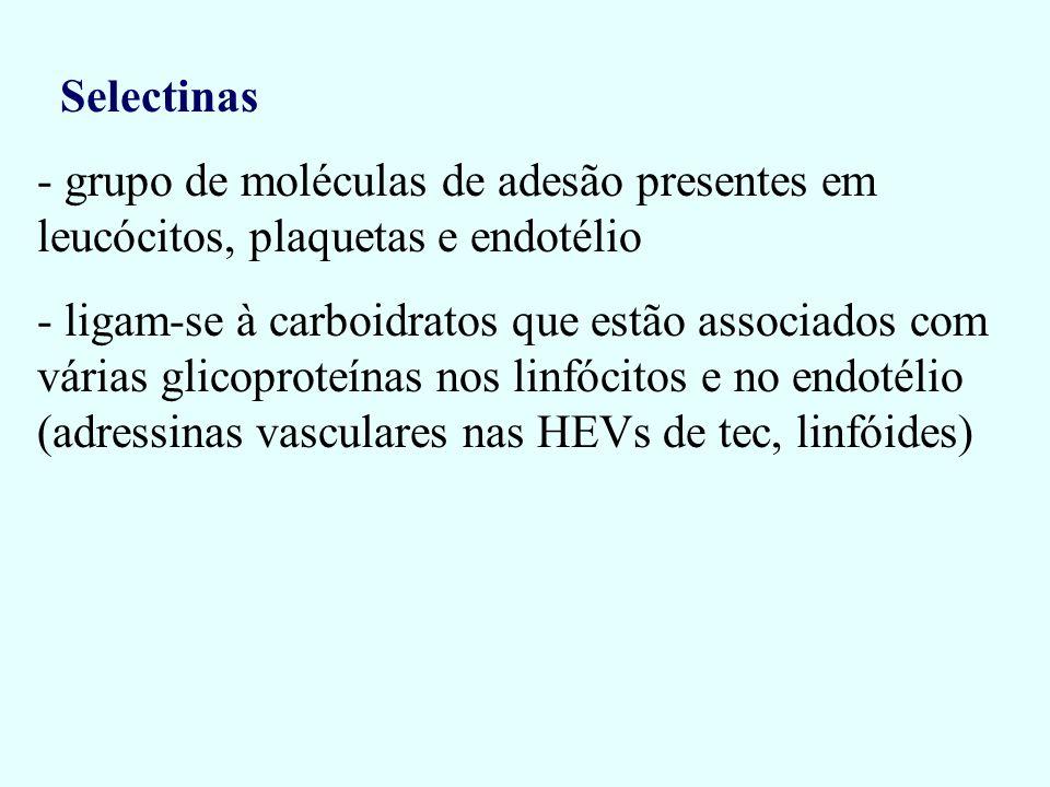 Selectinas grupo de moléculas de adesão presentes em leucócitos, plaquetas e endotélio.