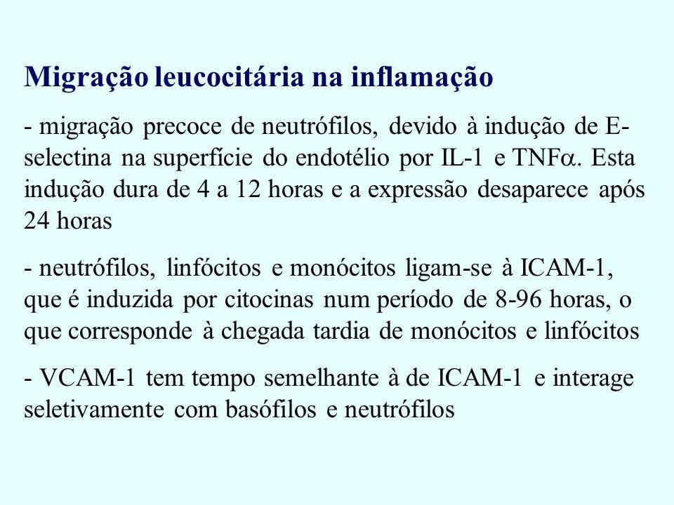 Migração leucocitária na inflamação