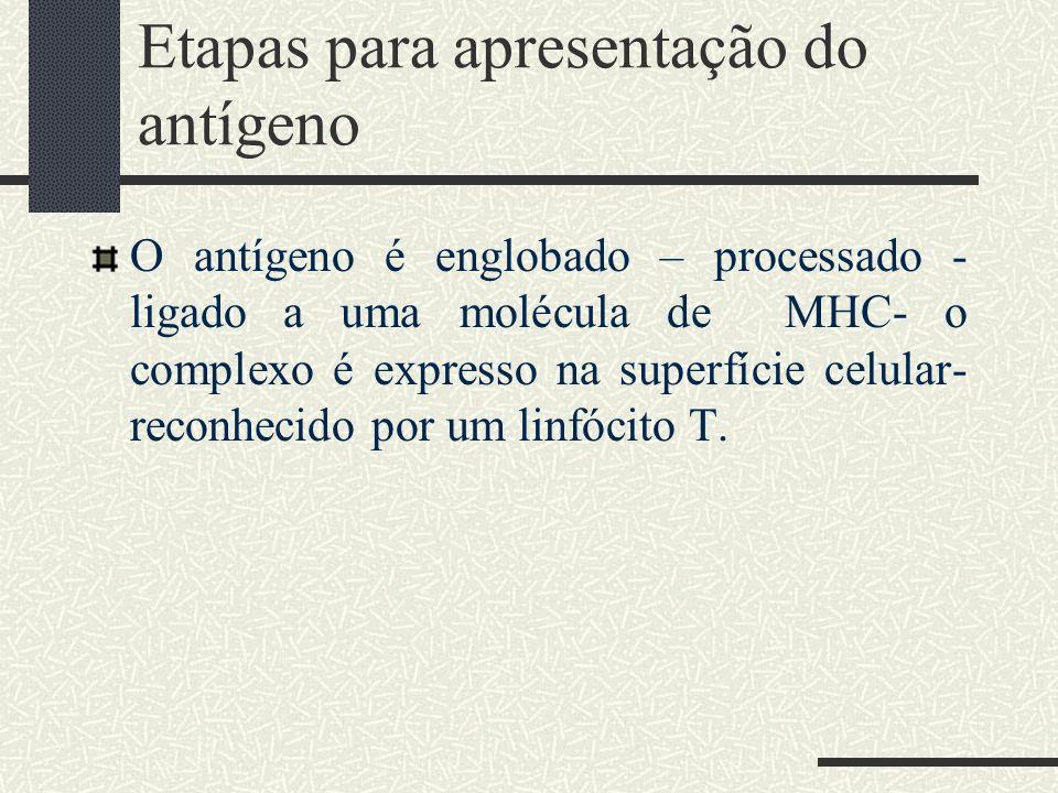 Etapas para apresentação do antígeno