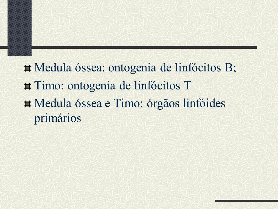 Medula óssea: ontogenia de linfócitos B;