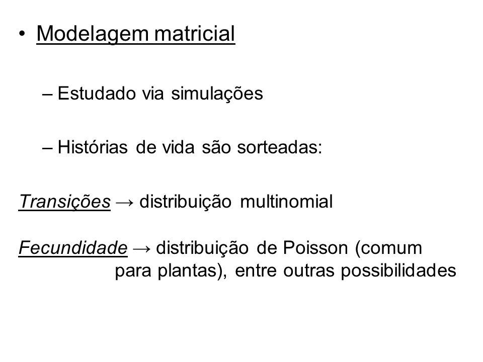 Modelagem matricial Estudado via simulações