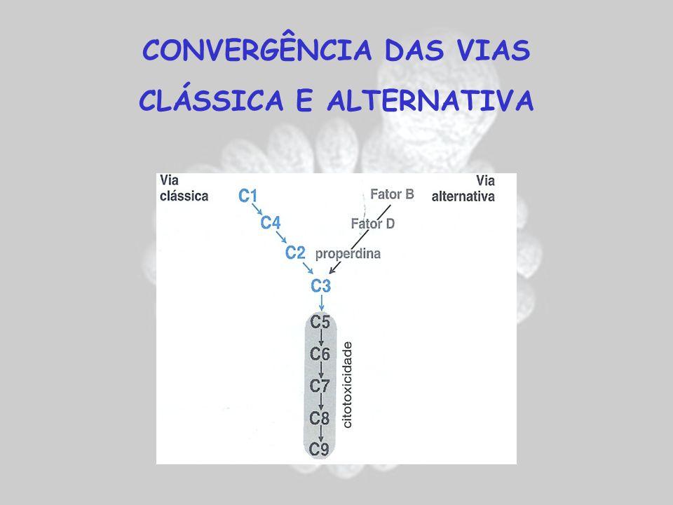 CLÁSSICA E ALTERNATIVA