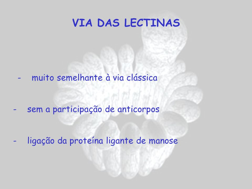 VIA DAS LECTINAS - sem a participação de anticorpos