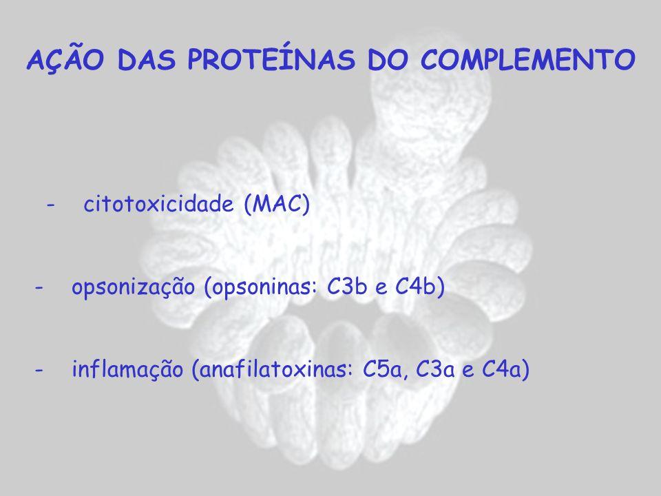 AÇÃO DAS PROTEÍNAS DO COMPLEMENTO