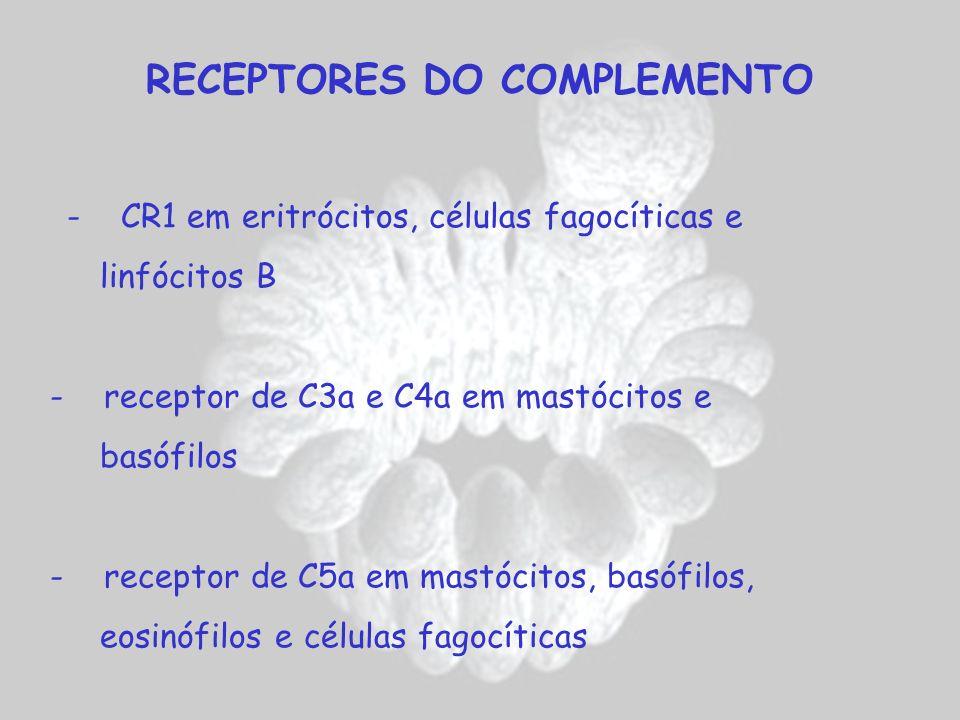 RECEPTORES DO COMPLEMENTO