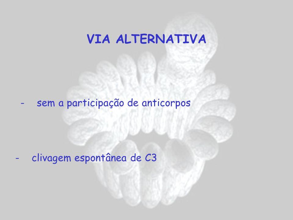 VIA ALTERNATIVA - clivagem espontânea de C3