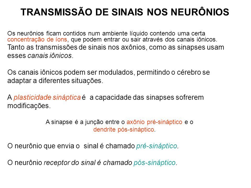 TRANSMISSÃO DE SINAIS NOS NEURÔNIOS