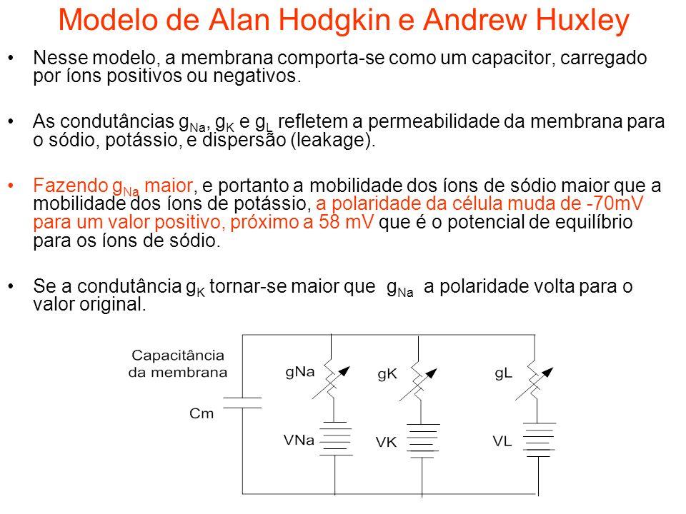Modelo de Alan Hodgkin e Andrew Huxley