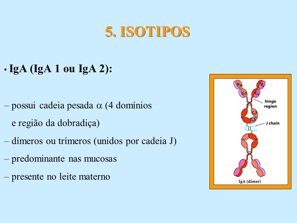 5. ISOTIPOS – possui cadeia pesada  (4 domínios