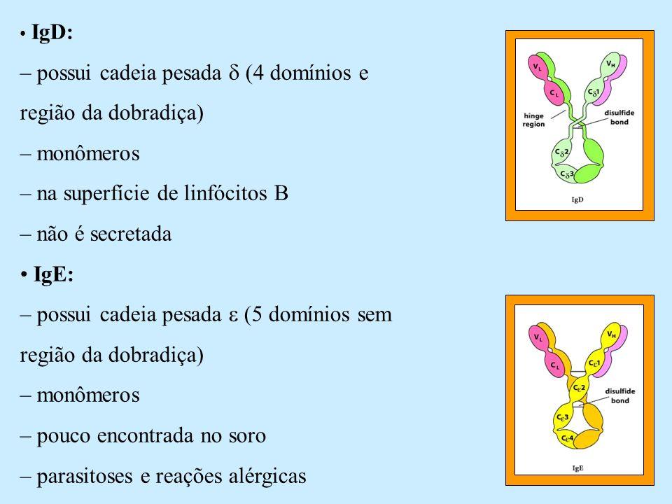 – possui cadeia pesada  (4 domínios e região da dobradiça)
