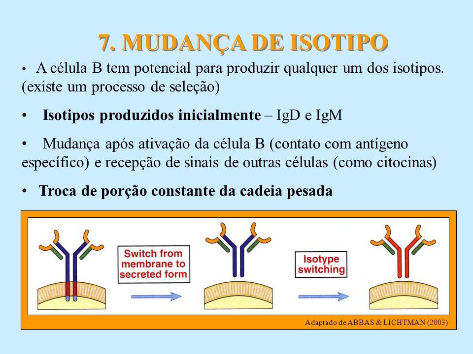 7. MUDANÇA DE ISOTIPO Isotipos produzidos inicialmente – IgD e IgM