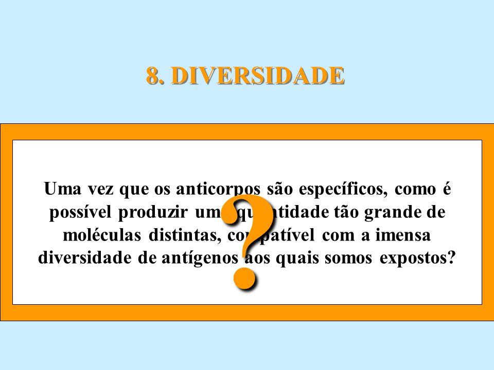 8. DIVERSIDADE