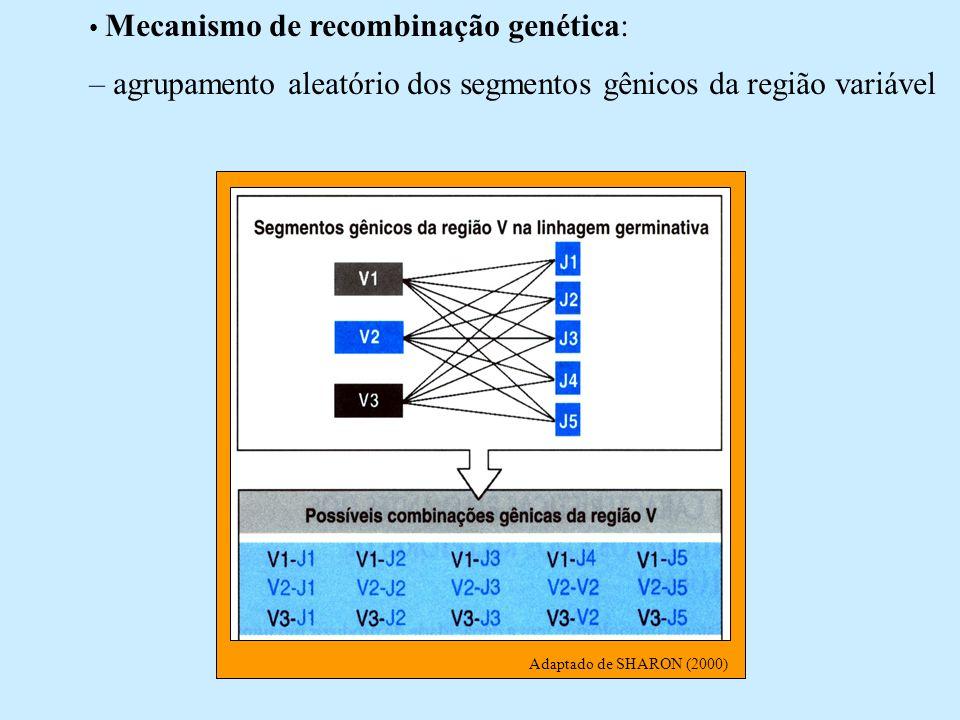 – agrupamento aleatório dos segmentos gênicos da região variável
