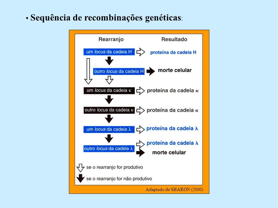 Sequência de recombinações genéticas: