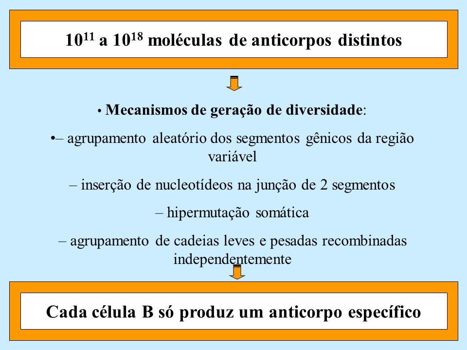 1011 a 1018 moléculas de anticorpos distintos