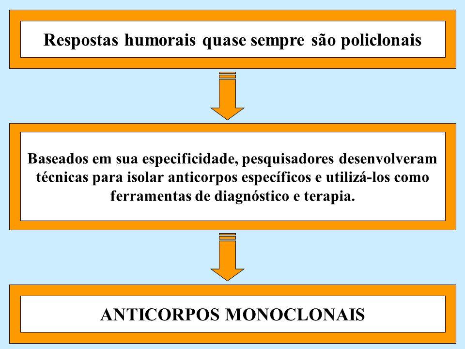 Respostas humorais quase sempre são policlonais ANTICORPOS MONOCLONAIS