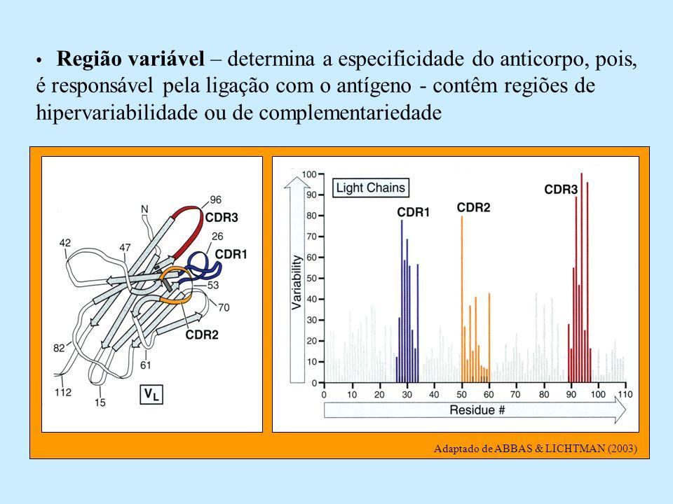 Região variável – determina a especificidade do anticorpo, pois, é responsável pela ligação com o antígeno - contêm regiões de hipervariabilidade ou de complementariedade