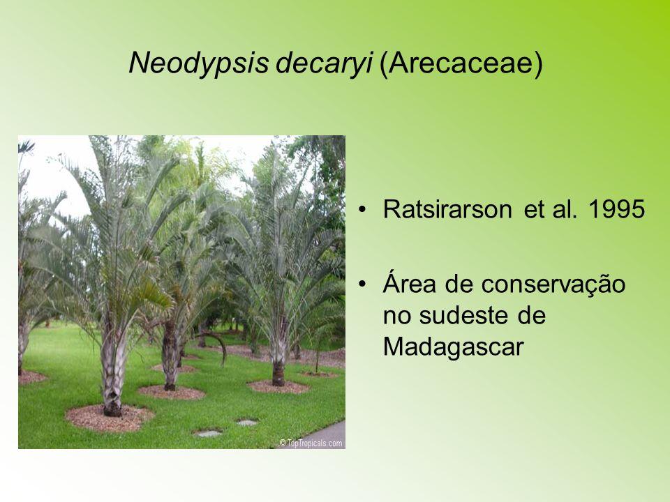 Neodypsis decaryi (Arecaceae)