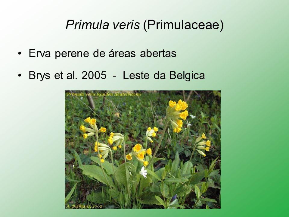 Primula veris (Primulaceae)
