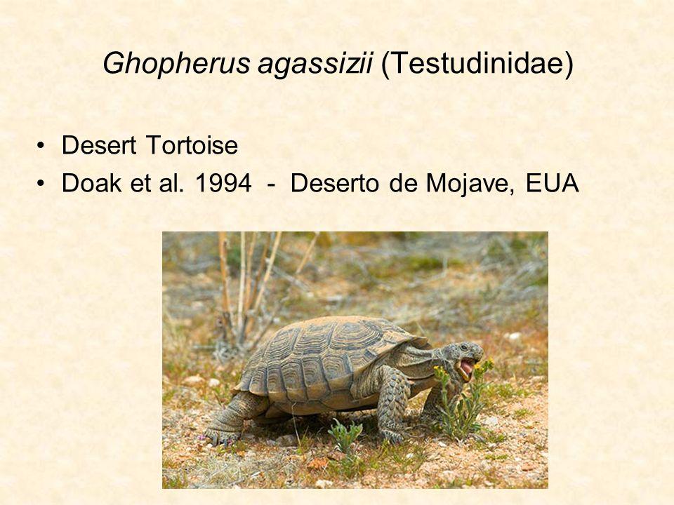 Ghopherus agassizii (Testudinidae)
