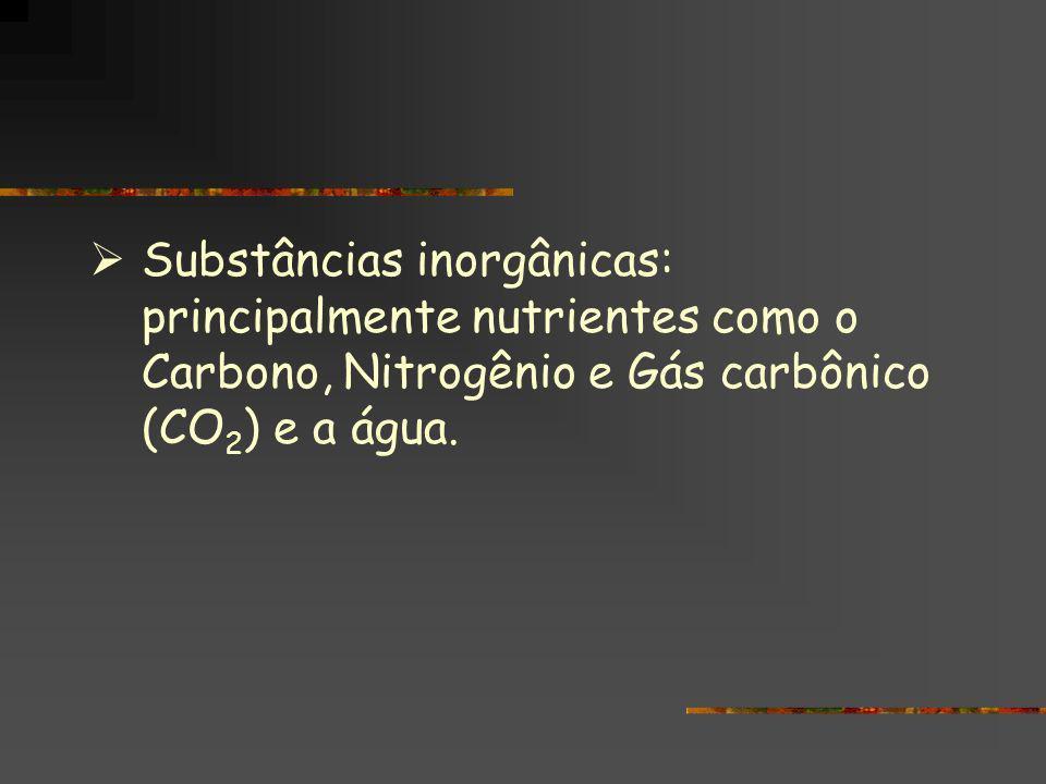 Substâncias inorgânicas: principalmente nutrientes como o Carbono, Nitrogênio e Gás carbônico (CO2) e a água.