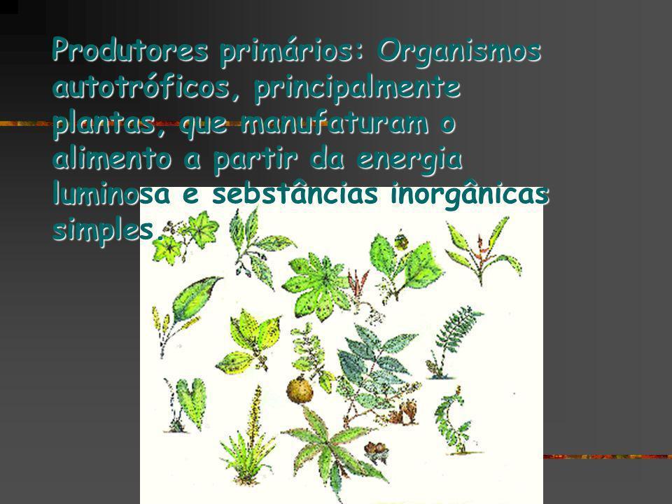 Produtores primários: Organismos autotróficos, principalmente plantas, que manufaturam o alimento a partir da energia luminosa e sebstâncias inorgânicas simples.