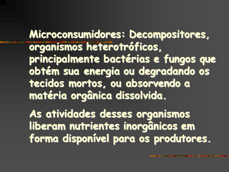 Microconsumidores: Decompositores, organismos heterotróficos, principalmente bactérias e fungos que obtém sua energia ou degradando os tecidos mortos, ou absorvendo a matéria orgânica dissolvida.