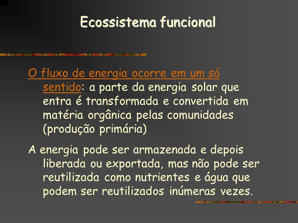 Ecossistema funcional