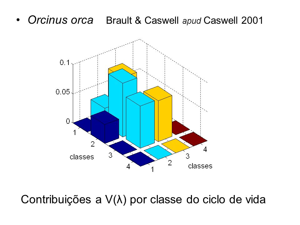 Orcinus orca Brault & Caswell apud Caswell 2001