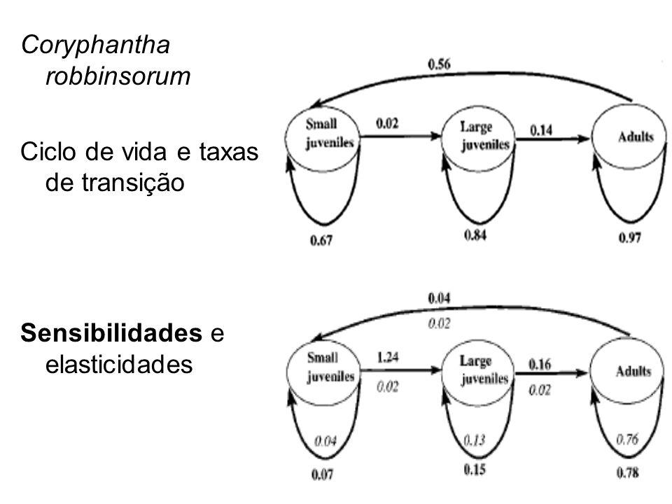 Coryphantha robbinsorum