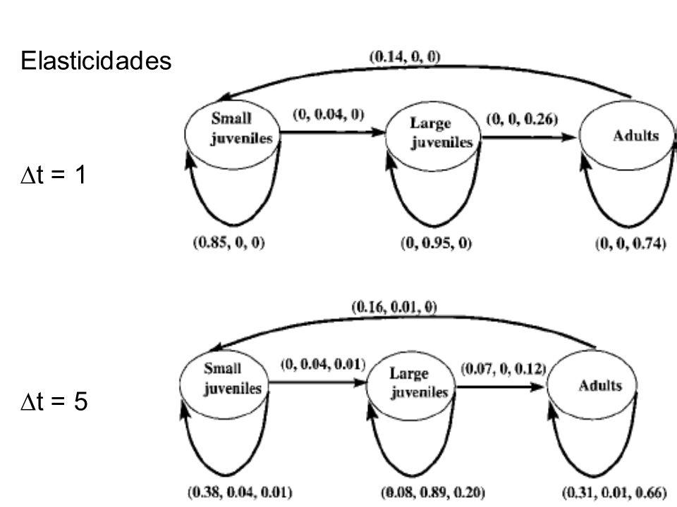 Elasticidades ∆t = 1 ∆t = 5